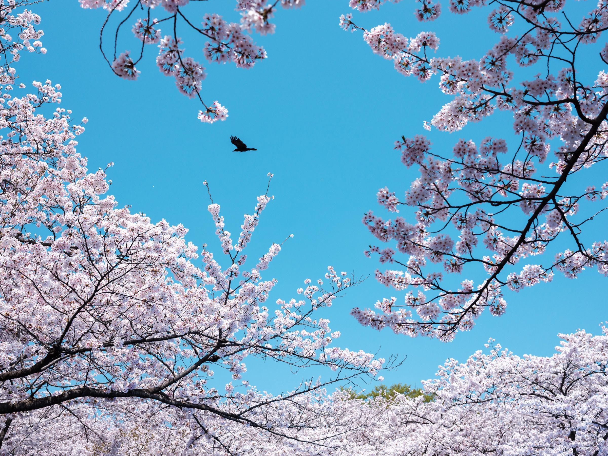 Fujifilm-GFX-Japan-Street-Photography-41