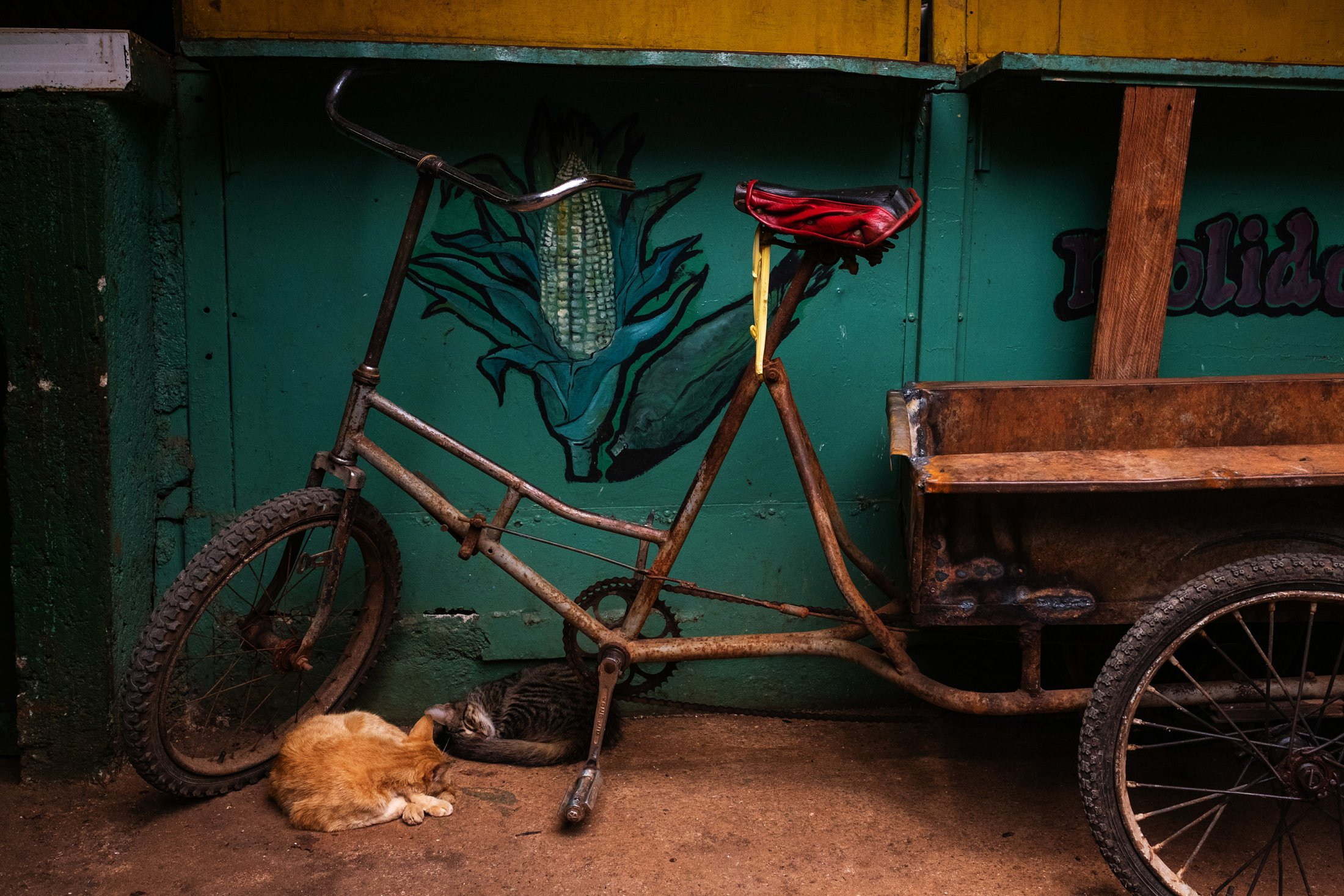 cat and bicycle in Cuba