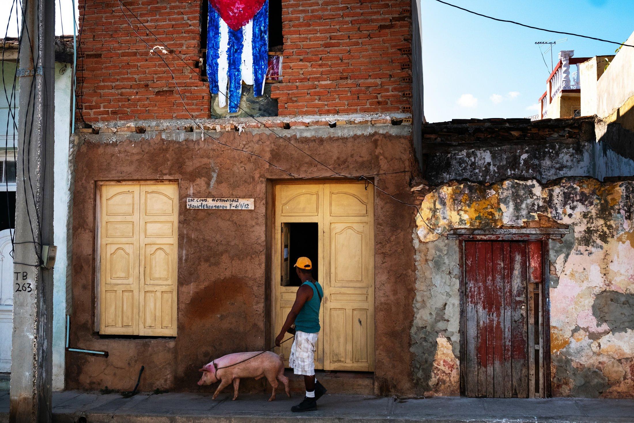 a man walking a pig in Havana, Cuba
