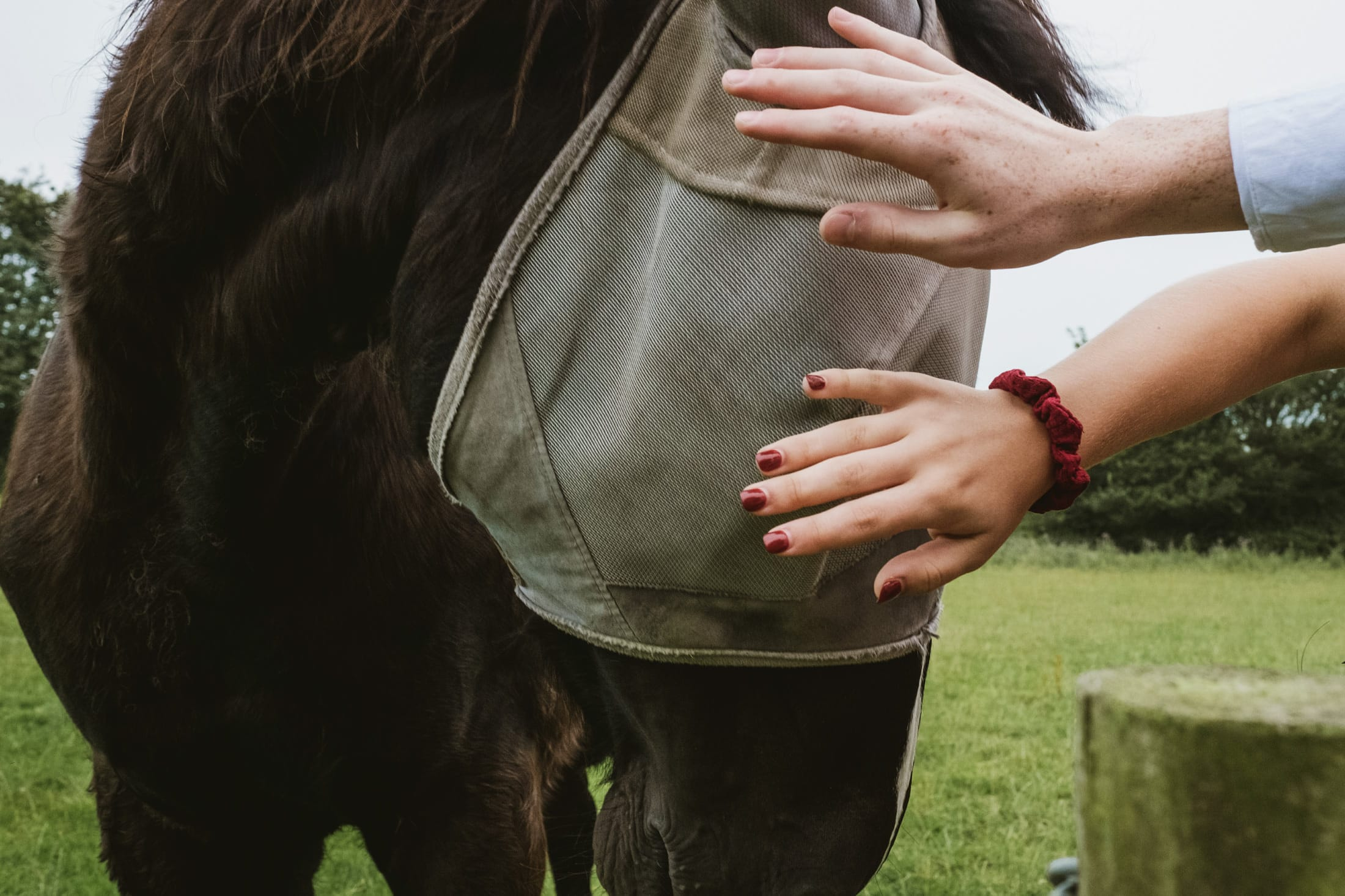 two hands patting horse